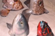 Various Fish Heads