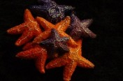 Seastar Cluster Pin