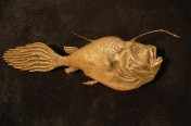 Sea Devil Angler Fish (80cm)